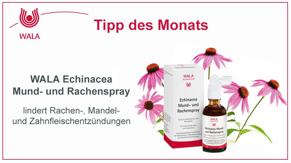Homöopathie Tipp:  WALA Echinacea Mund- und Rachenspray